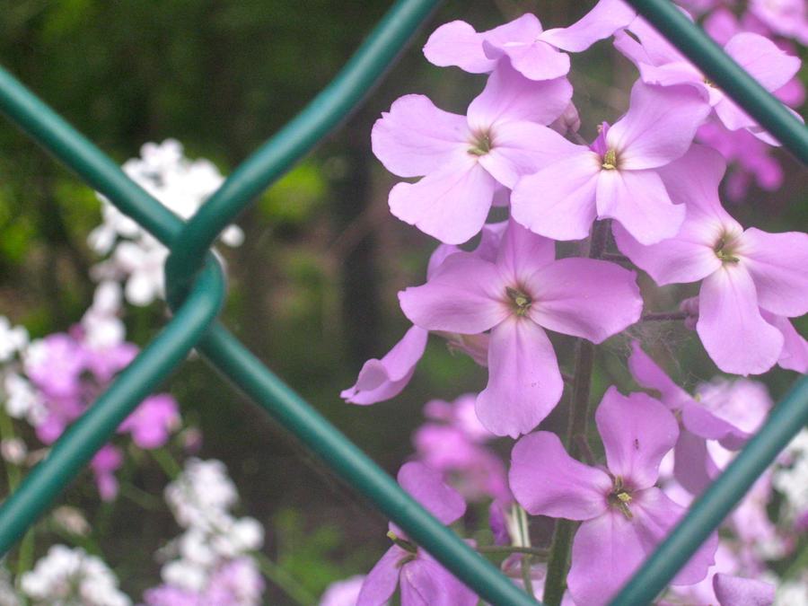 wildflowers_by_diamondleaf_d5ct0bs-fullv
