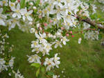 White and Pink Flowering Tree