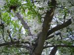 White Flower Canopy