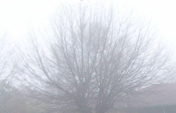 Misty Tree by emo-nisi-mors