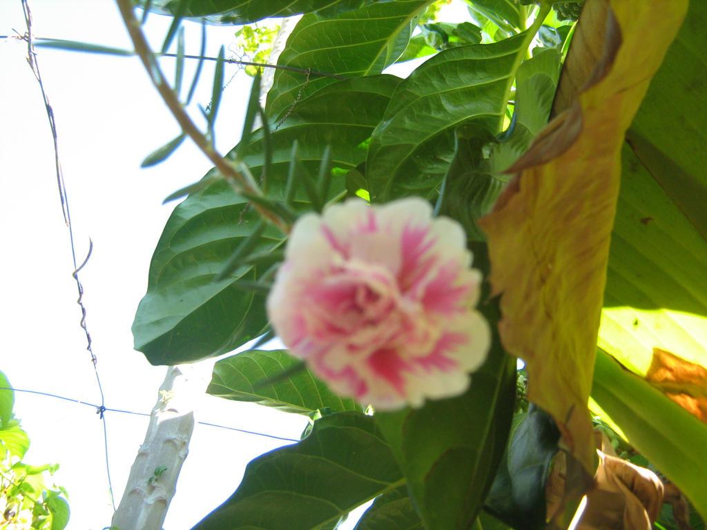 flor de las 11 by lakyvaquero