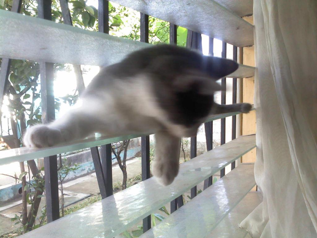 yo por aqui limpiando al ventana by lakyvaquero