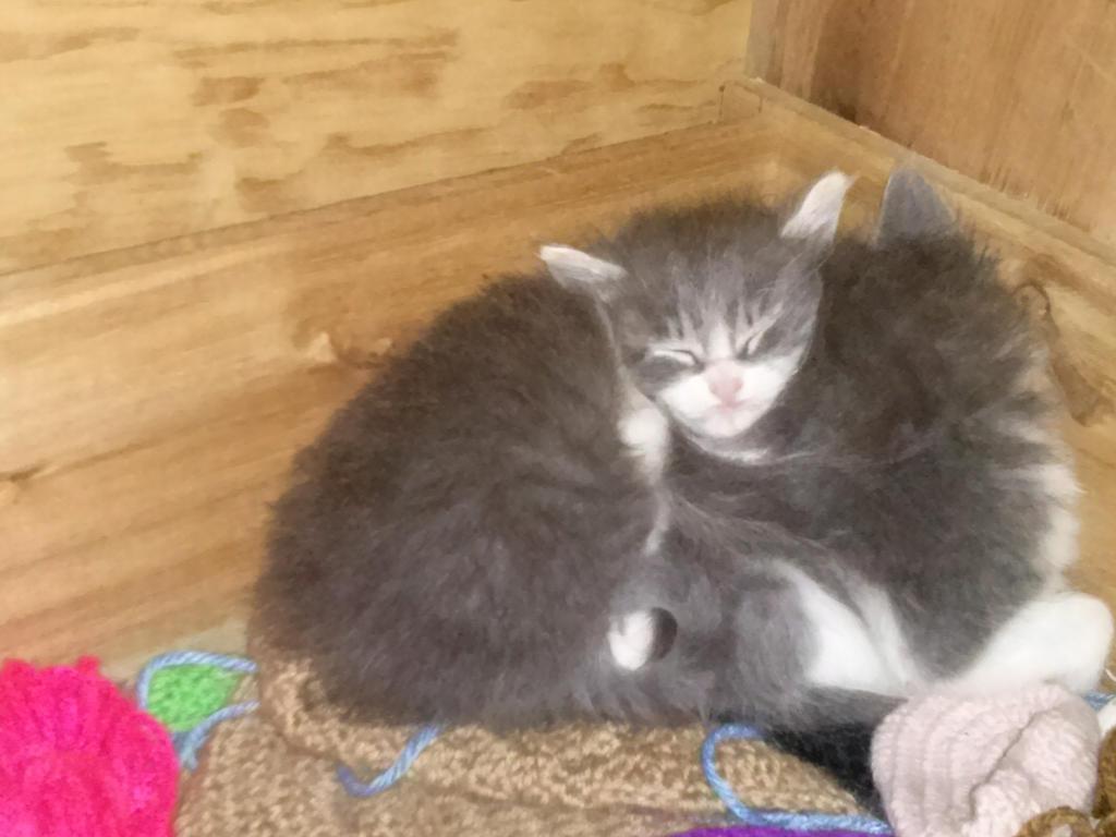 little kittens by lakyvaquero