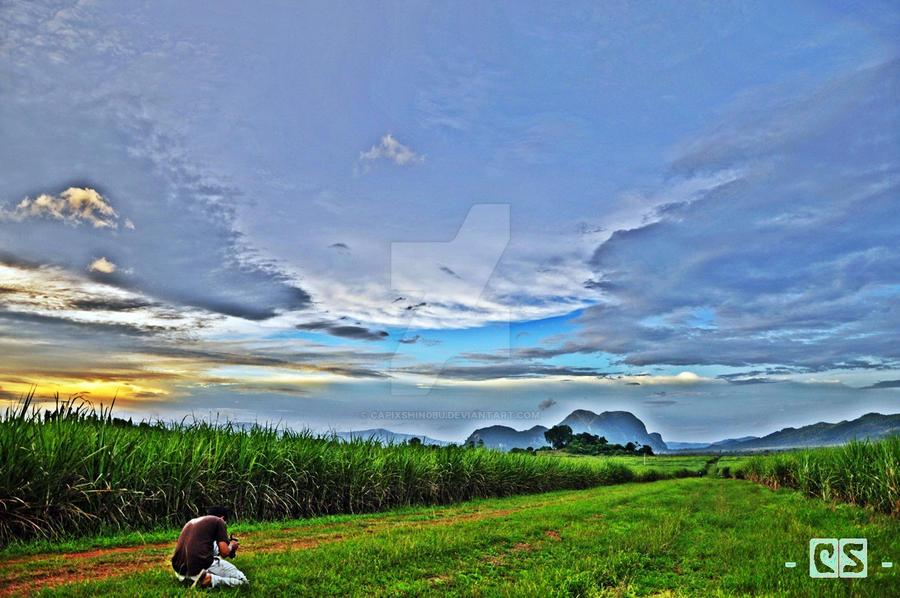 Sugarcane field by capixshin0bu