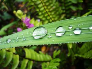 Raindrops by hey-its-Skai