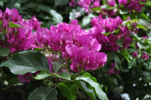 Pink Flowers by CherryPhotos