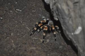 Spider 1 by CherryPhotos