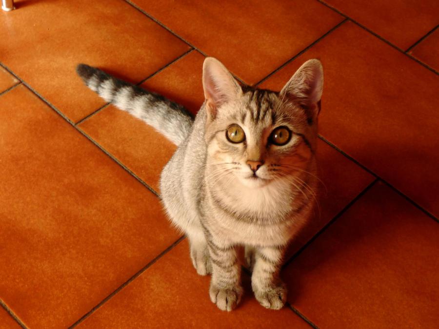 Occhi, Felini. by volantchat