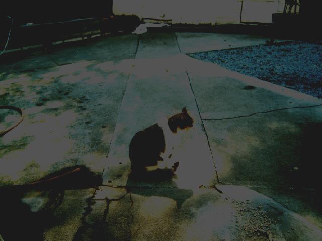 the loner by Alli-aka-Street