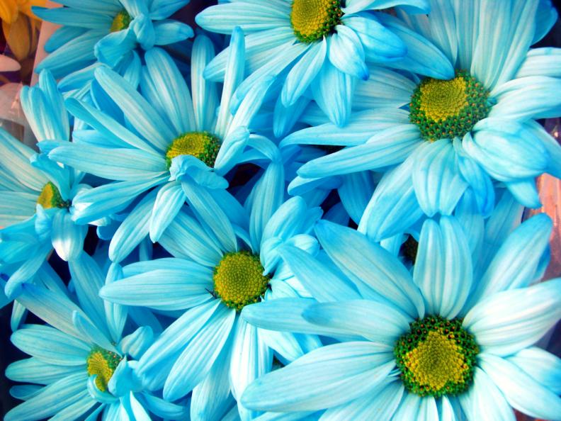 Blue Daisies by xx-OverTheRainbow on DeviantArt