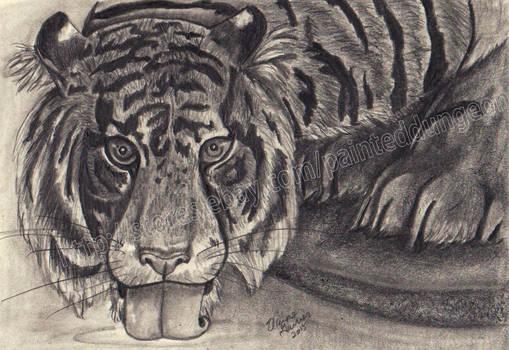Tigerscan003