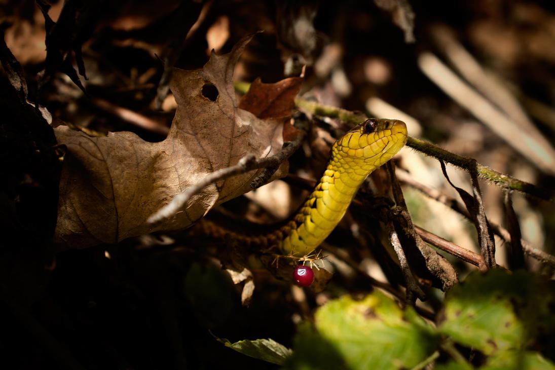 Common Garter Snake by LeeUmass