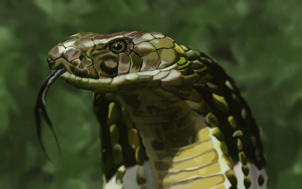 Snake by HollyBrake