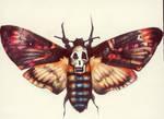 Death's-Head Hawk Moth.