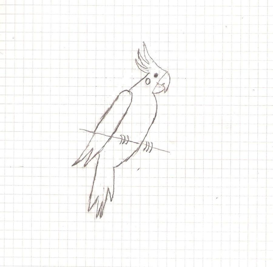 cockatiel sketch by MexicanSkull