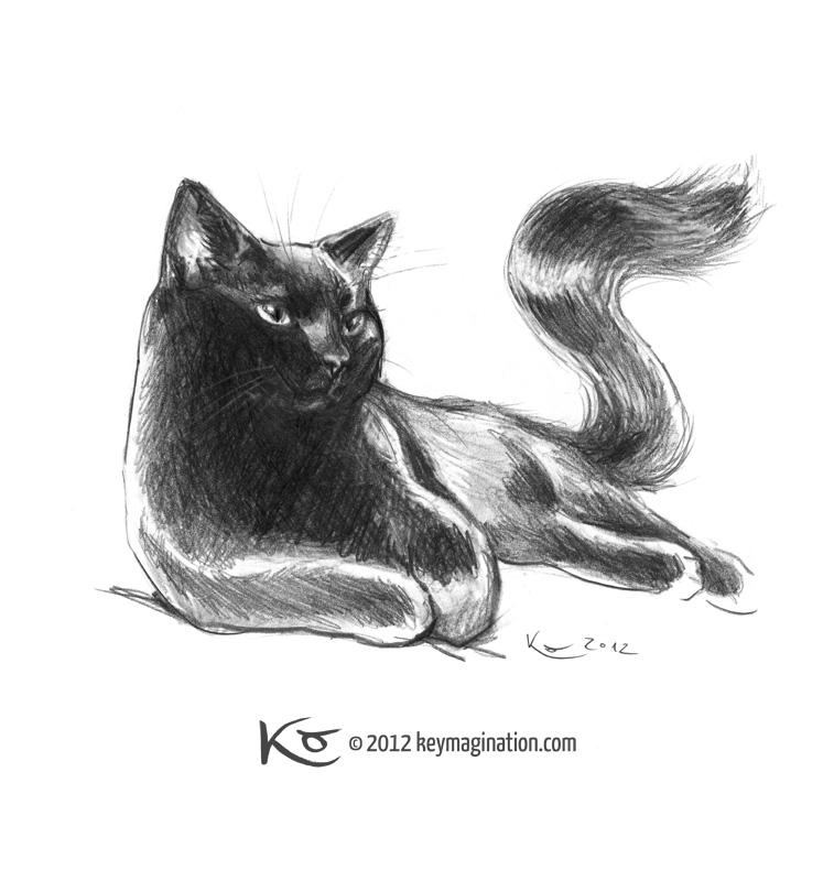 Black cat study 2012 by Keymagination
