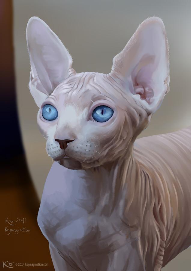 Dobby portrait c2014 by Keymagination