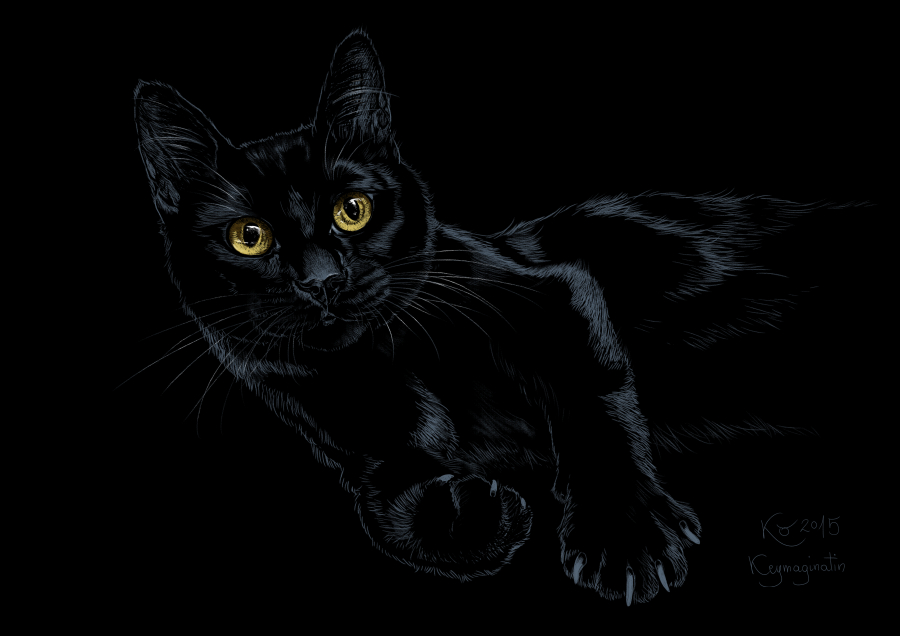 Black cat laying 2015 by Keymagination