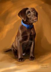 Brown Puppy 2015