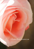 Shades of Pink by RosalieBriar