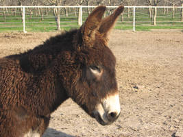 Donkey by Jellify