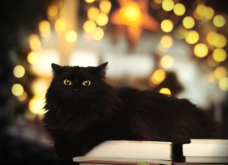 Christmas lights by Thunderi on DeviantArt