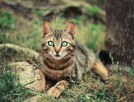 Cat's beauty by Thunderi