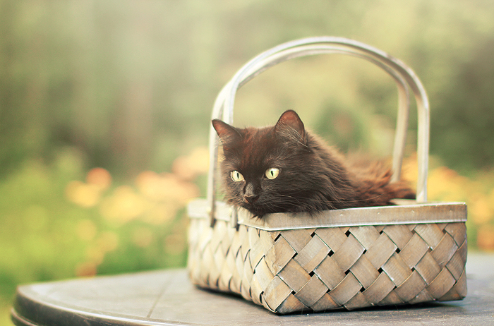 In the basket by Thunderi