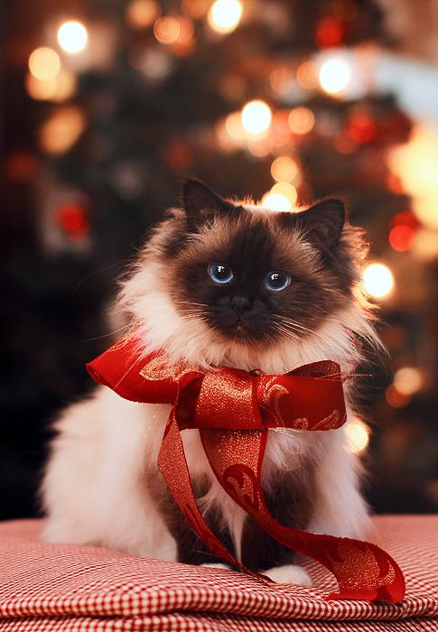 Santa's little helper by Thunderi