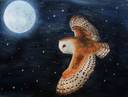Barn owl at night by Thunderi
