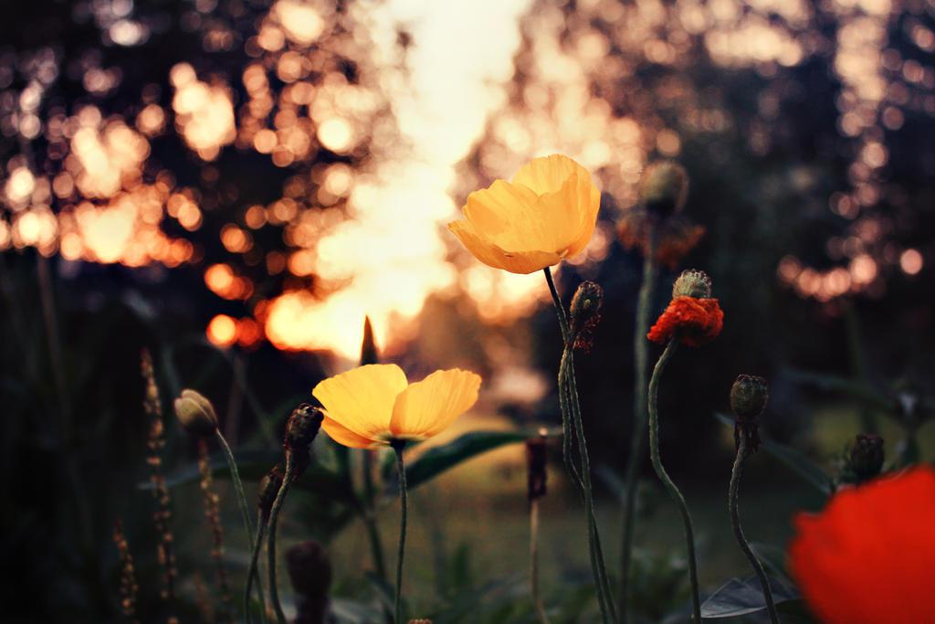 serene sunset by Thunderi