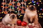Merry Christmas 2014 ! by Thunderi