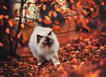 Autumn fluffball