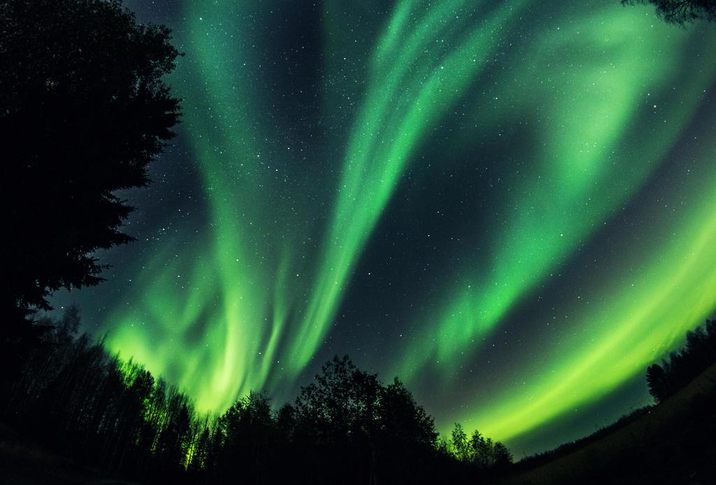 Auroras by Thunderi