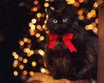 christmas kitty..