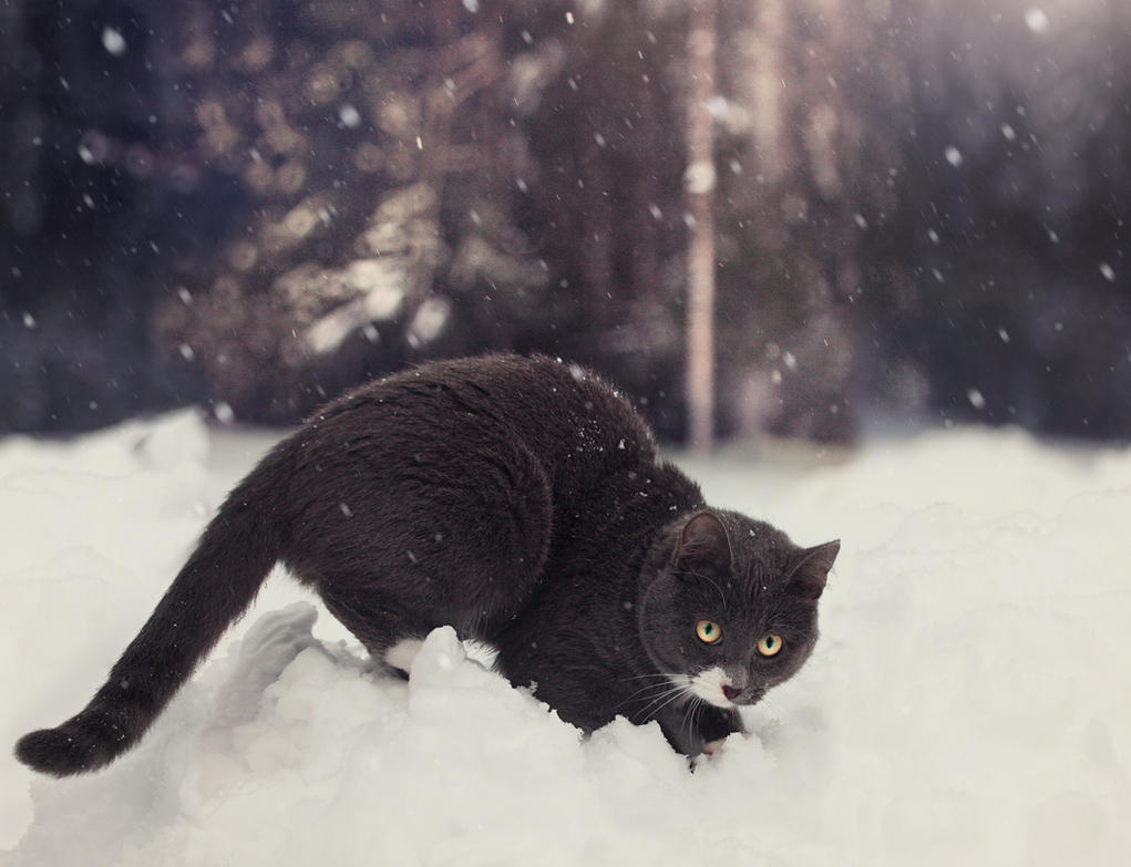 playing in snow by Thunderi