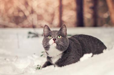 snow kitten by Thunderi