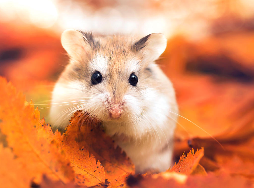 Happy autumn by Thunderi