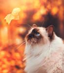 falling leaf by Thunderi