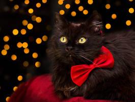 pretty bowtie by Thunderi