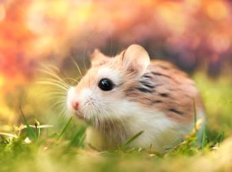 Summer hamster by Thunderi