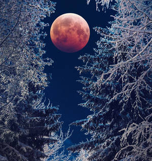 Blood Moon and Winter forest
