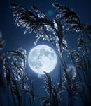 moon mood by Thunderi