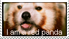 I am a red panda by Zhucha