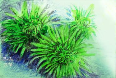 Green chrysanthemums by Zhucha