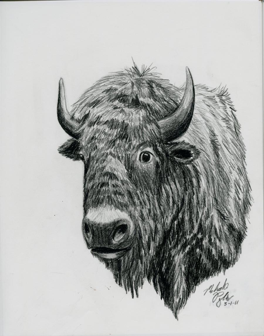 Buffalo by MelmelDraws