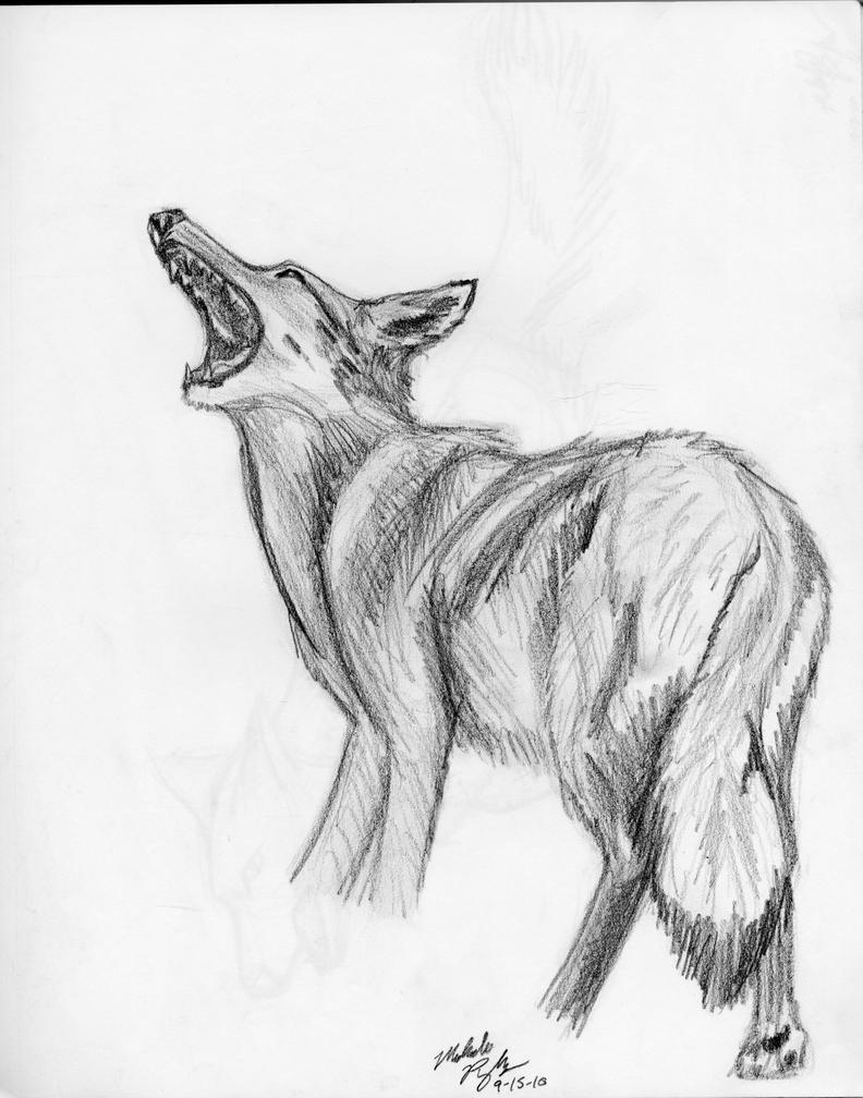 Coyote by MelmelDraws