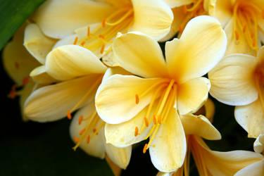yellow flower by stockofshutterbugmom