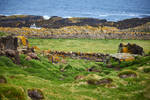 Isle of May - 8