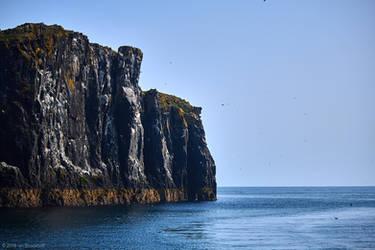 Isle of May - 23 by IanStruckhoff